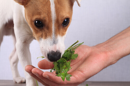 cane che mangia verdure dalla mano del padrone