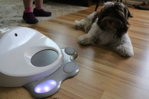 cane con gioco interattivo in casa