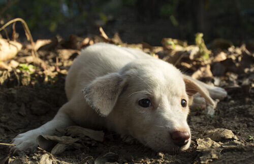 Un cane depresso può arrivare a suicidarsi