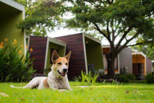 Consigli per evitare problemi con il cane