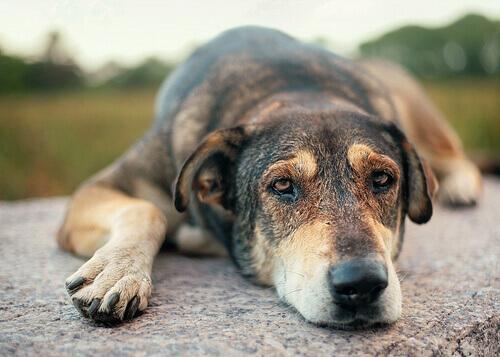 cane maltrattato seduto per terra