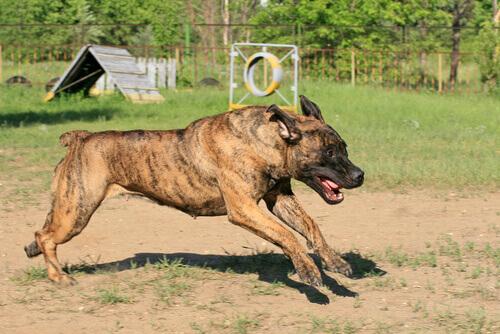 Razze di cani non riconosciuti dalla FCI