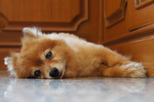 Come calmare il pianto notturno di un cucciolo