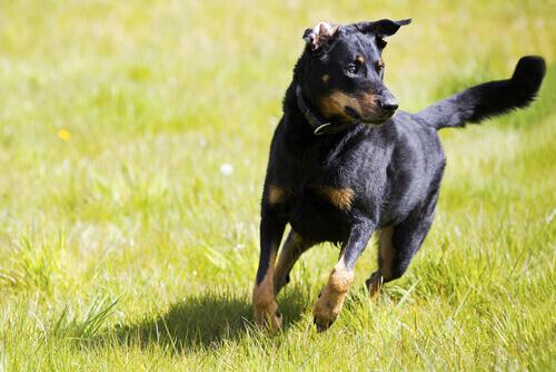 Consigli su come addestrare cani indipendenti