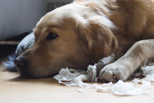 Cane senza autocontrollo