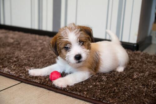L'importanza della stimolazione precoce nei cuccioli