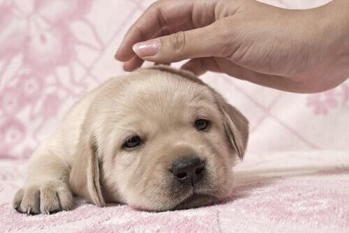 donna accarezza cucciolo