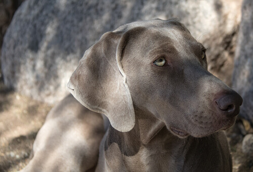 Cani del gruppo 7: classificazione delle razze secondo la FCI