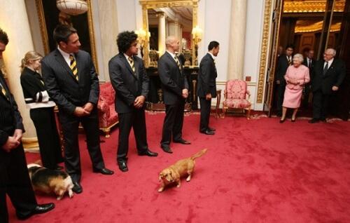 I cani della regina