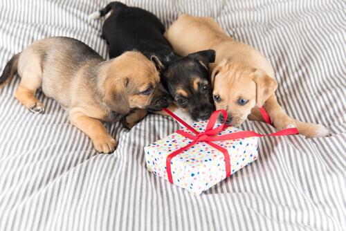 Come scegliere un regalo per il vostro animale?