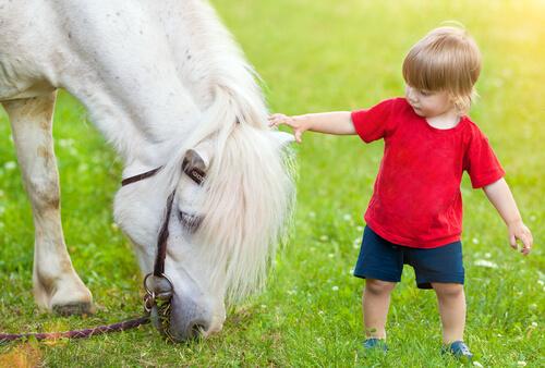 bambino accarezza pony bianco