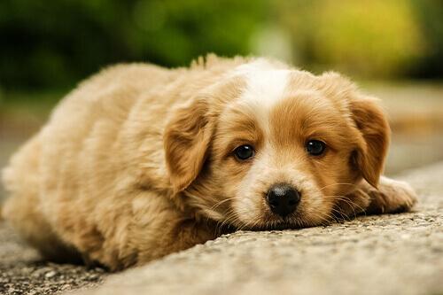 Come si deve trattare un cane maltrattato?