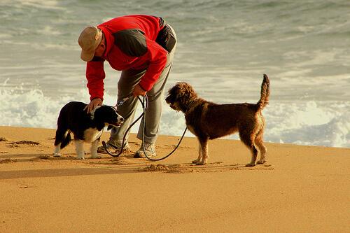 10 consigli per andare a correre con il vostro cane