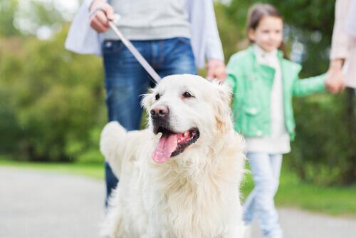 10 cose che il vostro cane fa per voi