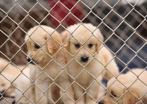 cuccioli di cane in gabbia