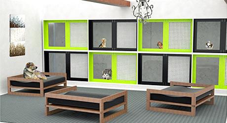 stanza con varie cucce per cani