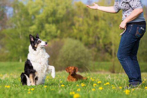 Esercizi di obbedienza di base nei cani