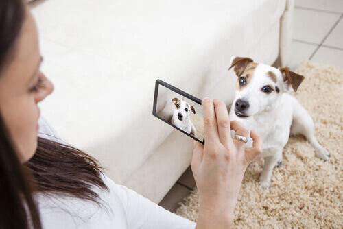 Ragazza cerca di scattare le migliori foto al suo cane