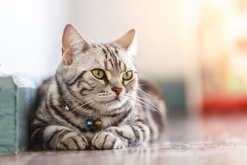 gatto seduto per terra