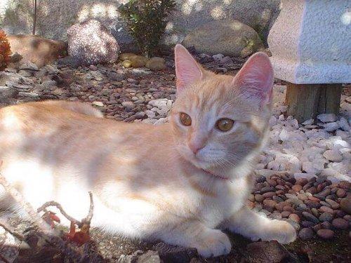 Quali sono le malattie virali nei gatti?
