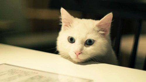 Animali adatti a vivere in appartamento