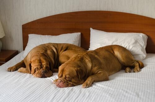 Come scegliere un buon hotel per cani?