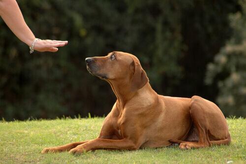 cane a cui viene insegnato un comando