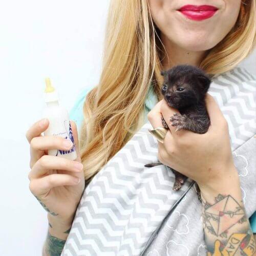 Kitten Lady: la donna che salva centinaia di gattini