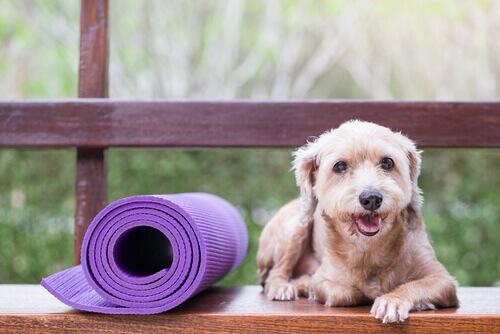 Medicina preventiva per animali domestici