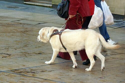I vari modelli di pettorina per un cane