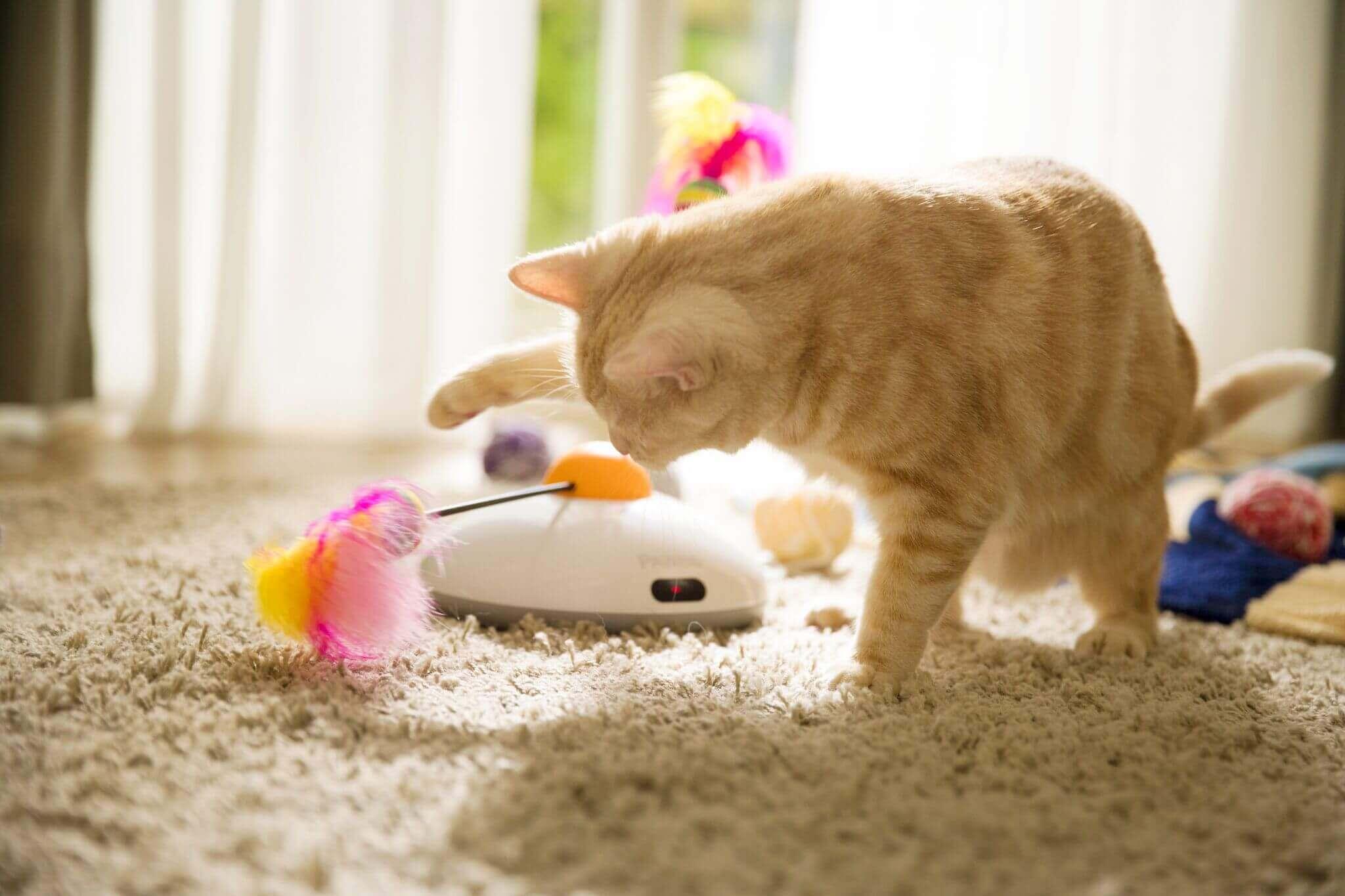 gatto gioca con oggetti e piume