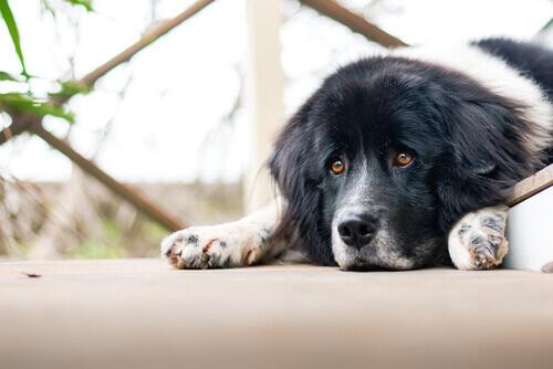 I cani possono soffrire di problemi emotivi?