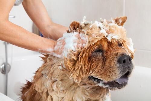 Si possono usare i prodotti da bagno delle persone sugli animali?