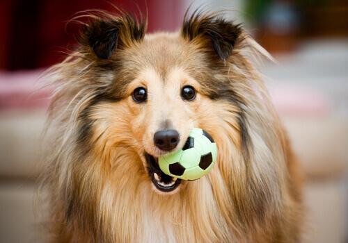 Regalo perfetto per il vostro cane: qualche consiglio