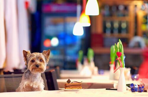 cane al tavolo di un ristorante
