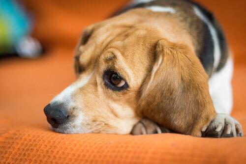 Sentimento di ingiustizia nei cani: di cosa si tratta?