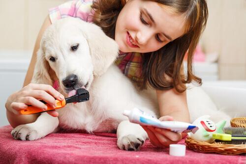 bambina lava denti al cane per preservare la sua igiene orale