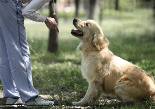 padrone indica con il dito cane seduto