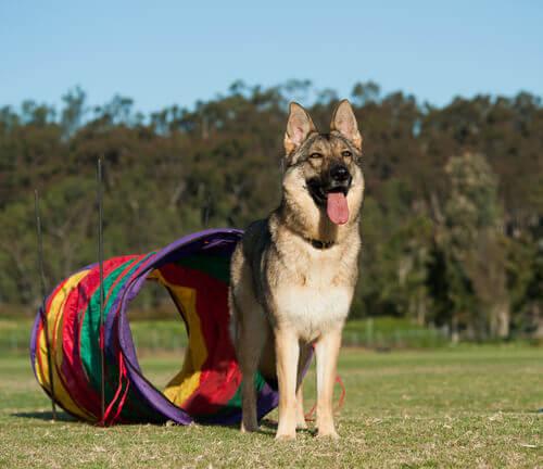 Giochi per cani alternativi