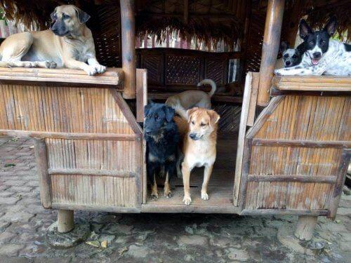 cani dentro la cuccia