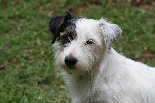 5 segnali di calma più comuni nei cani