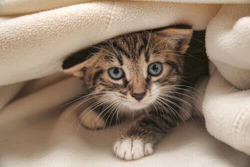 6 miti sui gatti che dovete conoscere