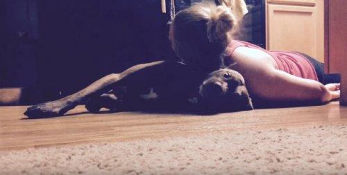 Colt, il cane addestrato per assistere la sua padrona