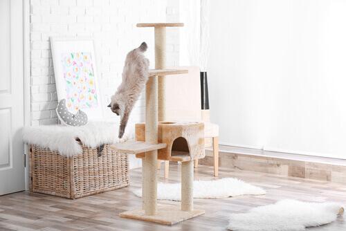 gatto su struttura del tiragraffi