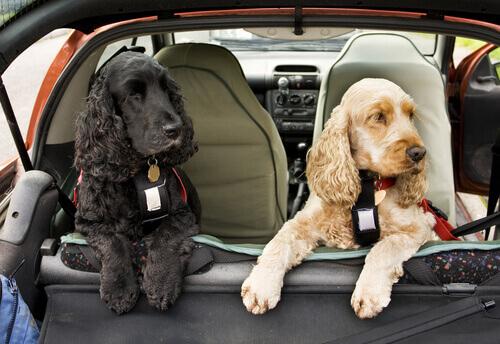 Cinture di sicurezza per cani: più tranquilli in auto