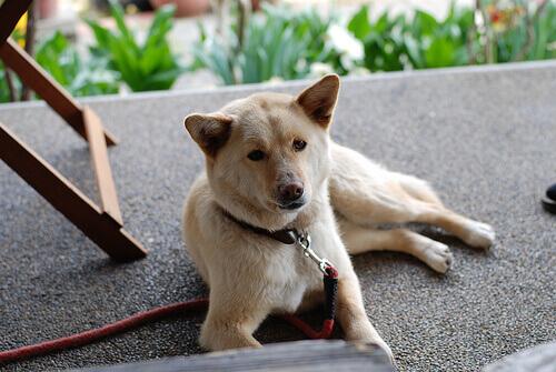 Intossicazione animale, come intervenire su cani e gatti