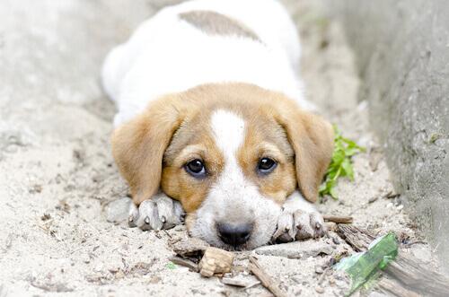 cucciolo sdraiato per terra