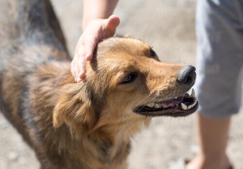 persona accarezza cane adulto