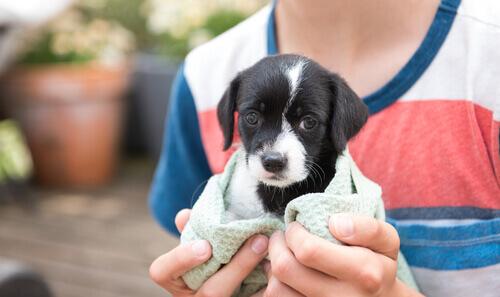 bambino con cagnolino bianco e nero tra le mani