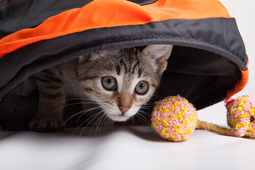 gatto tigrato nascosto con giochi